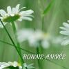 Cartes de voeux Bonne année  Fleurs