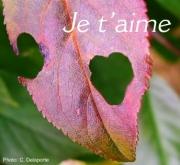Carte de voeux : Eloge de l'Amour (La Fontaine)