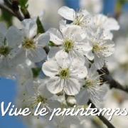 Carte de voeux : Vive le printemps