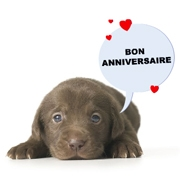 Carte de voeux : Adorable Anniversaire