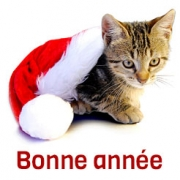 Carte virtuelle noel chat